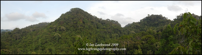 A view over the canopy of Sinharaja's lowland rainforest. Near to the Kudawa entrance in the west of Sinharaja