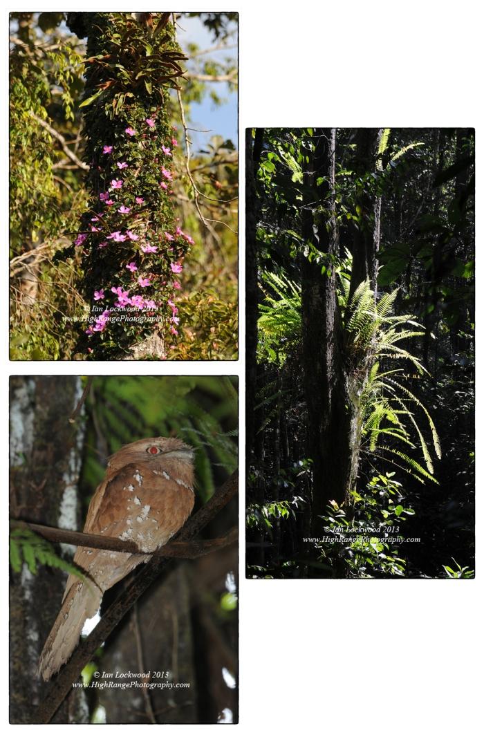 More biodiversity ():
