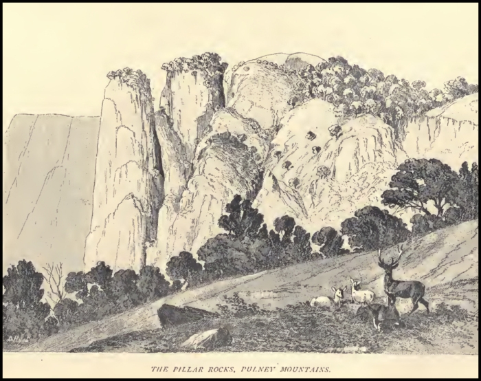 Pillar Rocks by Douglas Hamilton (mid 19th Century). The angle to get this view is now wooded with non native plantation trees. Sambar deer, meanwhile, are making a comdback int he Palanis after years of poaching decimated their populations.