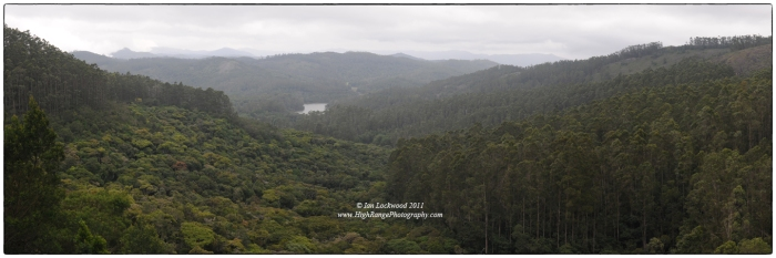 The classic tourist view: looking west over Berijam Lake from the fire tower view point. In this image, the arm of Mathikettan Shola is clearly distinguishable from the uniform, tall eucalyptus plantation (extreme left and right). These trees were planted on montane grasslands in the 1960s and 70s in a program to increase biomass for fuel and tanning purposes. With the exiting Landsat imagery it is difficult to distinguish shola patches from such evergreen plantations. This makes accurate classification at this sale challenging. In the future, as the resolution of the satellite imagery improves, remotely sensed multi-spectral imagery should be able to make this distinction.