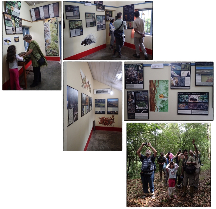 Snapshots from the NCF information center. The lower right images is from the forest walk about the time that we had the fine view of the Mountain Imperial Pigeon.