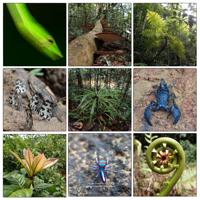A cacophony of diversity: Snapshots of Sinharaja's flora & fauna from the May 2014 IA field study.