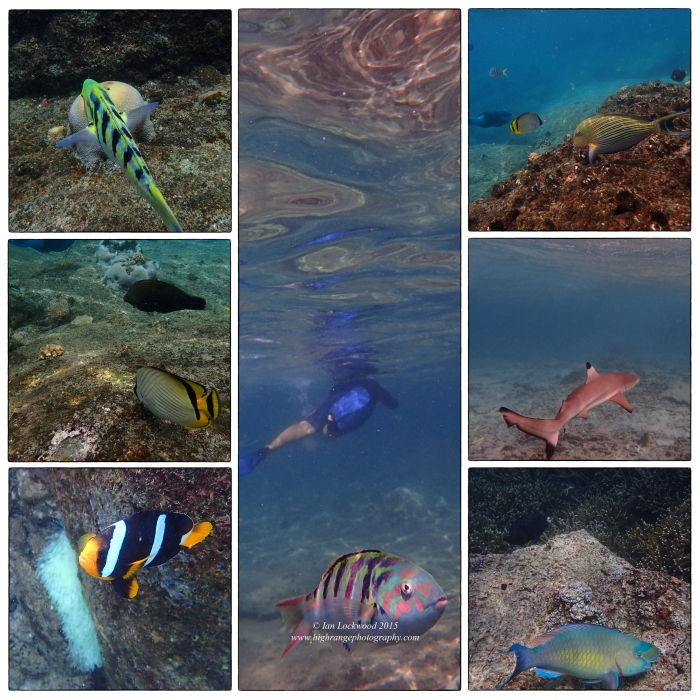Fish at Pigeon Island