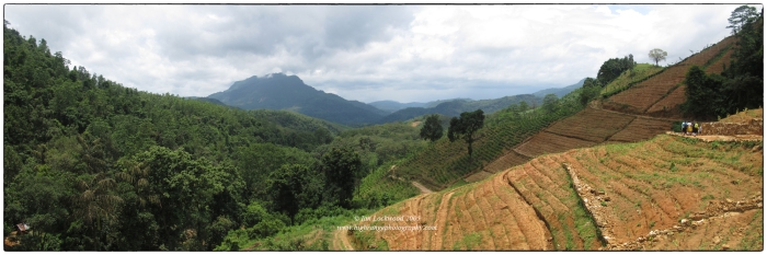 Landscape above the Kelani Valley highlighting rubber plantations (to the left) and land being readied for tea cultivation.