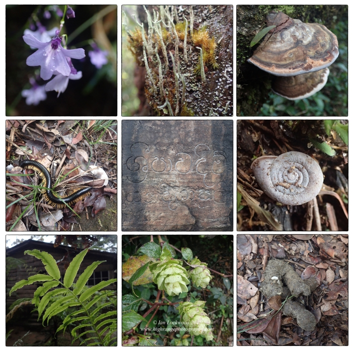 Collage of low res snapshots taken of life forms and waste on the trail to Sri Pada during the DP1 ES&S field study there in December 2015.
