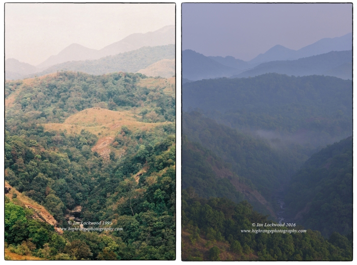 There have been significant changes in Silent Valley since it started receiving formal protection from the Keralal Forest Department. One change and improvement that is visibly obvious is the increased forest cover. The image on left was taken in January 1995 during a fleeting day-long visit that I did. The right images was taken from roughly the same place this month (April 2016). Though the lighting is not great several of the patches of grasslands have now been taken over my forest cover. This of course poses interesting challenges as there is less fodder for large herbivores and SVNP's wildlife staff reported decline in gaur and Sambhar. The tree growth is of native vegetation and appears to be following the somewhat predictable stages of ecological succession that one would expect in this area.