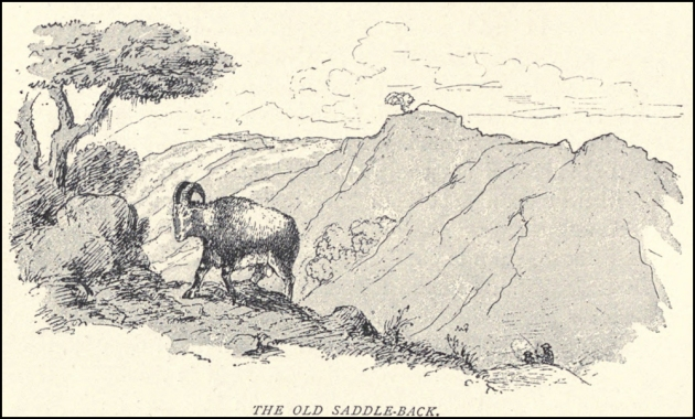 """Douglas Hamilton's """"the old buck of Kodaikanal."""" In a Record of Southern India (see online links) he describes shooting this near to what is know known as Priests Walk- a place on the outskirts of the Kodaikanal municipality and just below the infamous Ponds thermometer factory. The image is sourced from the British Library via Wikipedia (referenced below)."""