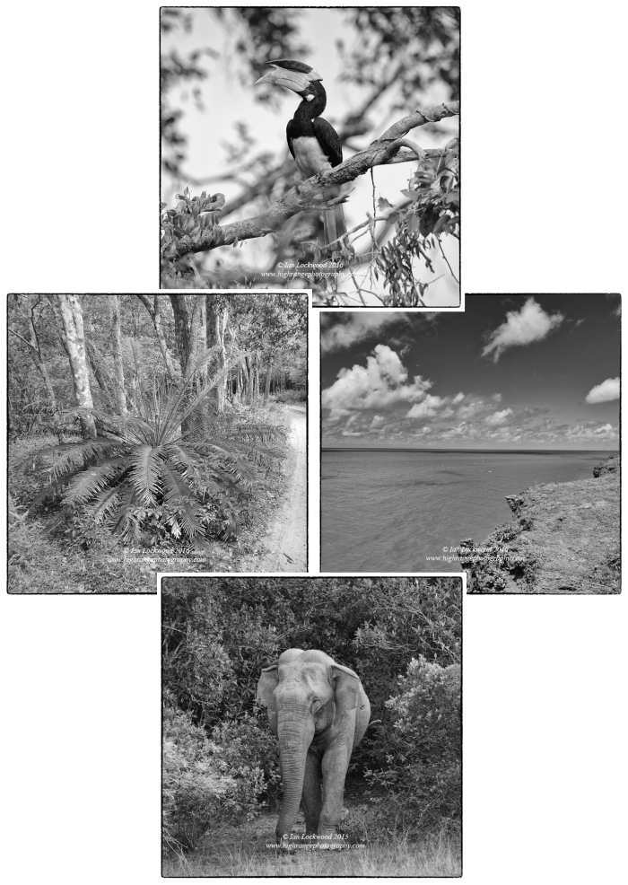 Signature wildlife and habitat from Wilpattu National Park: From top Malabar Pied Hornbill (Anthracoceros coronatus), cliffs over the Gulf of Mannar at Kudramalai, elephant in core area, and cycad inside the interior.