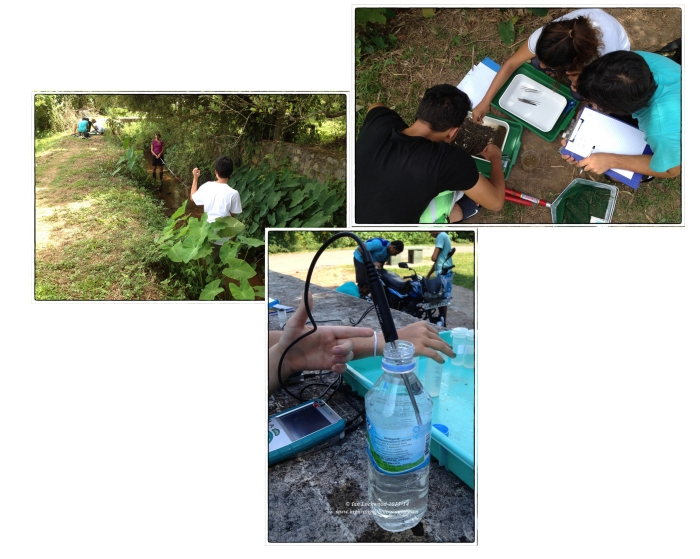 Assessing water quality at Talangama wetlands (clockwise from upper left): DP students conducting a biotic index study of an irrigation canal that is fed by the Talangama tank, checking water quality using Vernier Labquest probes (temperature here).