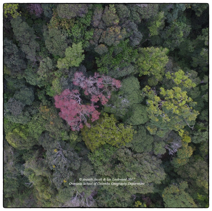 Aerial image of montane forest canopy at @ 1,000 meters.
