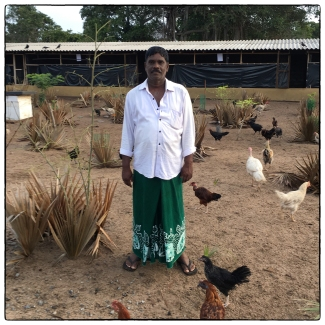 Laurence of Four Tees Guest House: a remarkable man making an effort to reduce plastic usage at his hotel and in the Mannar community. Here he is seen at his poultry farm where the hotel waste food helps to feed free-range fowl of different types.