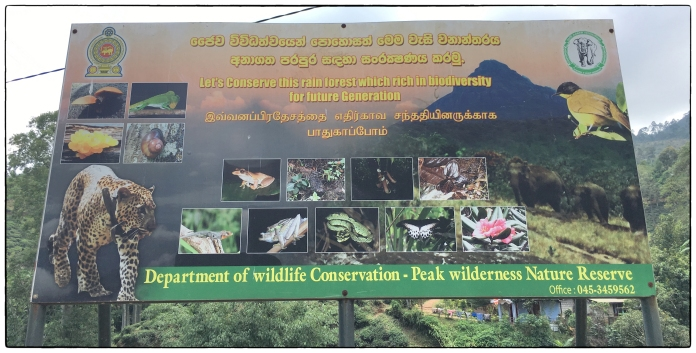 Peak iIlderness biodiversity poster