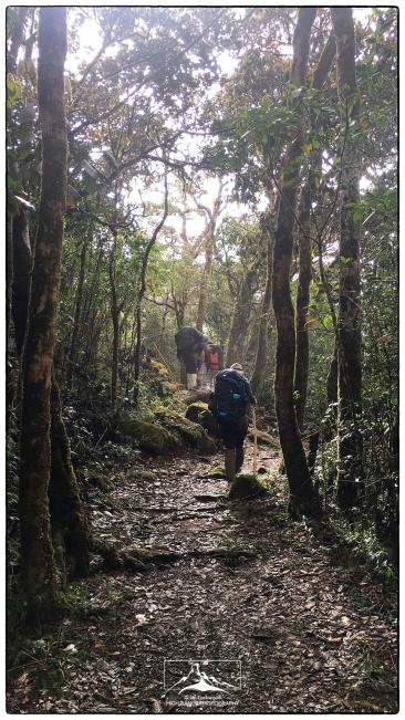 Pathway through Peak Wilderness
