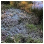 January was cold, as this frost by Kodai lake illustrates