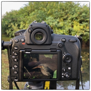 Black Bittern in viewfinder, Nugegoda Wetland Park