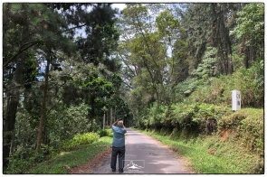 Professor Nimal Gunatilleke documents efforts to restore a Pinus plantation on the road up from Rakwana to Suriyakanda.