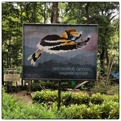 The Vazhachal area has some beautiful signage. You may not see the hornbills in person but an artist has helped catch their in-flight beautify for the benefit of visitors.