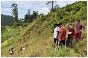 OSC students searching a former pantana for the endemic Daffodil orchid (Ipsea speciosa). (December 2018)