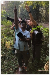 Lenny and the Chennai photographers located a Vernal Hanging Pigeon in the primary forest.
